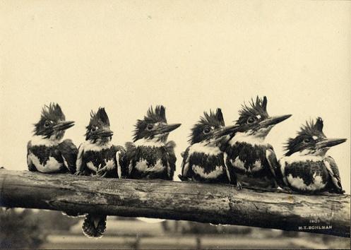 birdbybird4