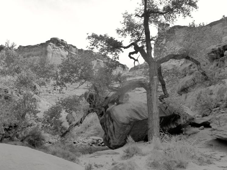 Hunter Canyon